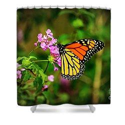 Autumn Beauty Shower Curtain by Kelly Nowak