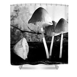 Autumn Belles Shower Curtain