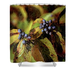 Autumn Berries 6047 Dp_2 Shower Curtain