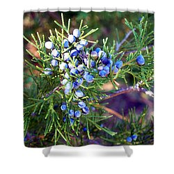 Shower Curtain featuring the photograph Autumn Berries by Betty Northcutt