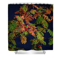 Shower Curtain featuring the photograph Autumn Berries by RKAB Works