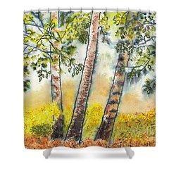 Autumn Birch Trees Shower Curtain