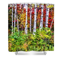 Shower Curtain featuring the painting Autumn Birches by Christopher Arndt