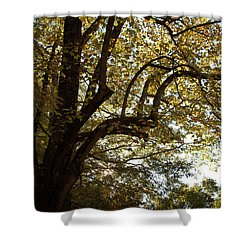Autumn Branches Shower Curtain