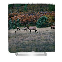 Autumn Bull Elk Shower Curtain by Jason Coward