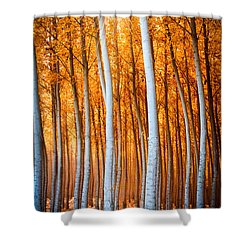 Shower Curtain featuring the photograph Autumn Canopy Burst by Dan Mihai