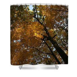 Shower Curtain featuring the photograph Autumn Canopy by Shari Jardina