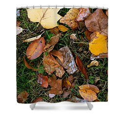 Autumn Carpet 001 Shower Curtain by Dorin Adrian Berbier