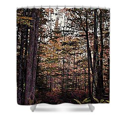 Autumn Color In The Woods Shower Curtain