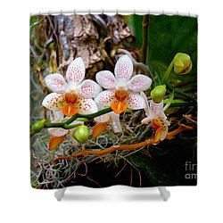 Autumn Colored Orchids Shower Curtain