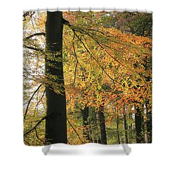 Autumn Colored Trees In Forest Shower Curtain