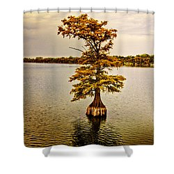 Autumn Cypress Shower Curtain by Scott Pellegrin
