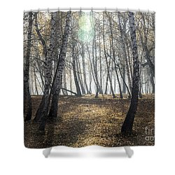 Autumn Deep Fog In The Morning Birch Grove Shower Curtain