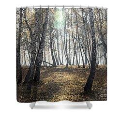 Autumn Deep Fog In The Morning Birch Grove Shower Curtain