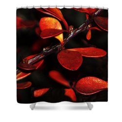 Autumn Details Shower Curtain