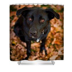 Autumn Dog Shower Curtain by Adam Romanowicz