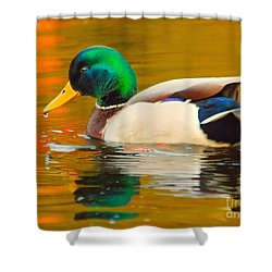 Autumn Duck Shower Curtain