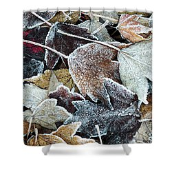 Shower Curtain featuring the photograph Autumn Ends, Winter Begins 1 by Linda Lees