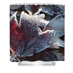 Shower Curtain featuring the photograph Autumn Ends, Winter Begins 2 by Linda Lees