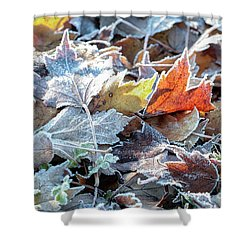 Shower Curtain featuring the photograph Autumn Ends, Winter Begins 3 by Linda Lees