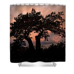 Shower Curtain featuring the photograph Autumn Evening Sunset Silhouette by Chris Lord