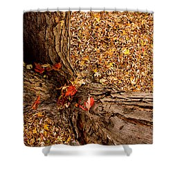 Autumn Fall Shower Curtain by James BO  Insogna