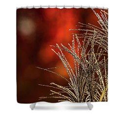 Autumn Fire - 2 Shower Curtain