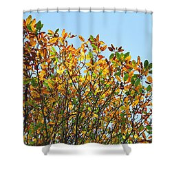 Shower Curtain featuring the photograph Autumn Flames - Original by Rebecca Harman