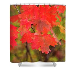 Shower Curtain featuring the photograph Autumn Flash by Bryan Carter