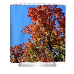 Autumn Foliage Shower Curtain
