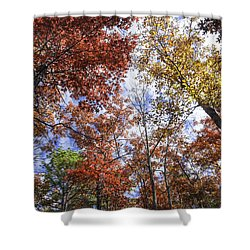 Autumn Forest Canopy Shower Curtain by Lynn Bauer