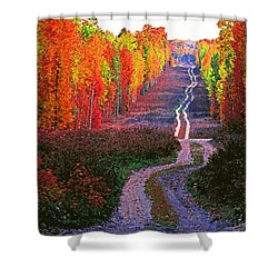 Autumn Forest Track Shower Curtain by Dennis Cox WorldViews