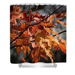 Autumn Gray Shower Curtain