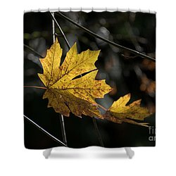 Autumn Highlight Shower Curtain