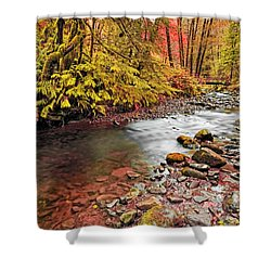 Autumn In An Oregon Rain Forest  Shower Curtain