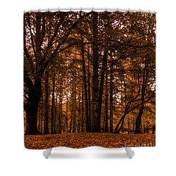 Autumn In Colligan Wood Shower Curtain