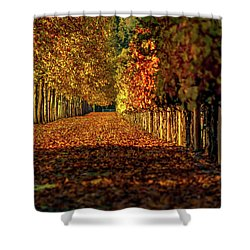 Shower Curtain featuring the pyrography Autumn In Napa Valley by Bill Gallagher