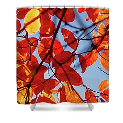 Autumn In The Arboretum Shower Curtain