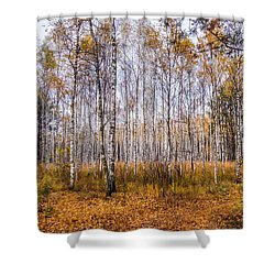 Autumn In The Birch Grove Shower Curtain
