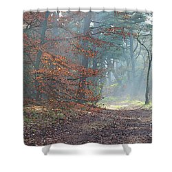 Autumn In The Forest, Painting Like Photograph Shower Curtain