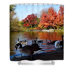 Autumn Lake With Geese Shower Curtain by Diane Lent
