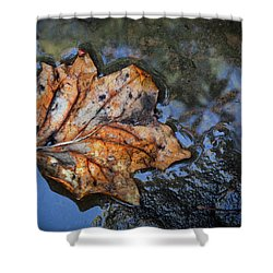 Shower Curtain featuring the photograph Autumn Leaf by Debra and Dave Vanderlaan