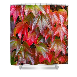 Autumn Leaves 01 Shower Curtain