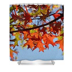Autumn Leaves 16 Shower Curtain