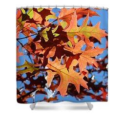 Autumn Leaves 17 Shower Curtain by Jean Bernard Roussilhe