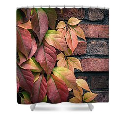 Autumn Leaves Against Brick Wall Shower Curtain