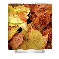 Autumn Leaves Shower Curtain by Carlos Caetano