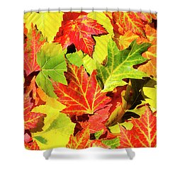 Shower Curtain featuring the photograph Autumn Leaves by Christina Rollo