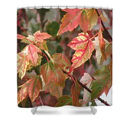 Autumn Leaves In Skagit County Shower Curtain