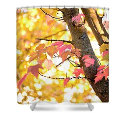 Shower Curtain featuring the photograph Autumn Leaves by Ivy Ho